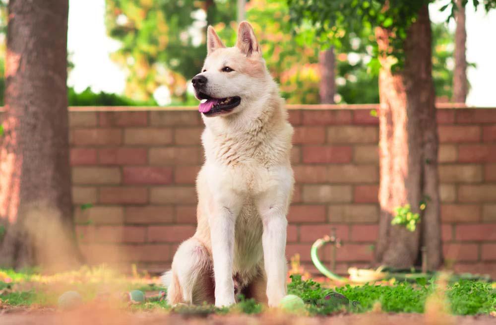veel-voorkomende-aandoeningen-bij-honden