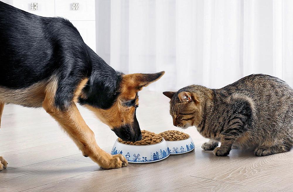 carocroc-hondenvoer-kattenvoer