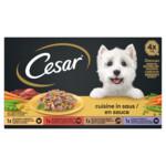 Cesar Cuisine in Saus Kuipje Multipack
