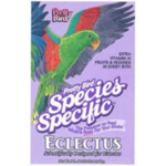 Pretty Bird Special Eclectus