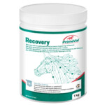 Primeval Recovery Paard